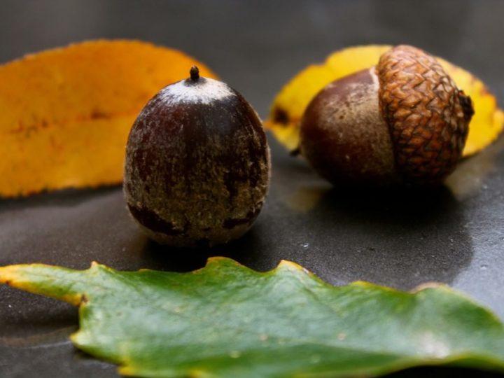 A Nutty Season
